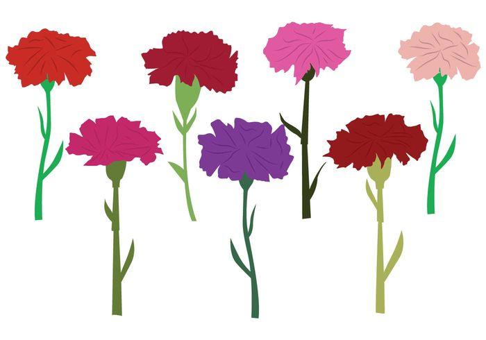 Гвоздика рисунок для детей цветными карандашами и красками.