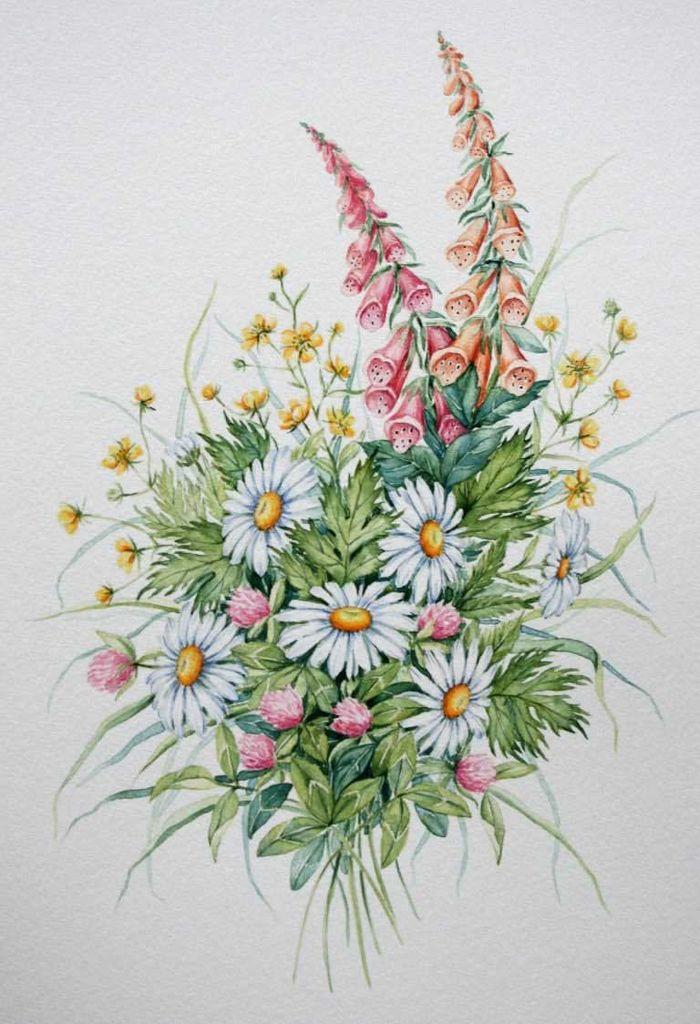 Полевые цветы картинки для дошкольников и школьников