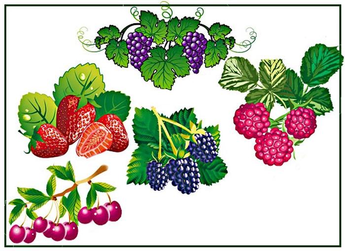 Картинки ягодок для детского сада