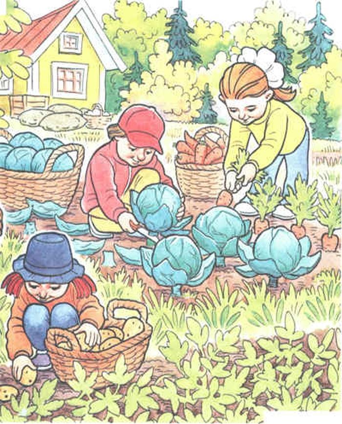 сюжетные картинки овощи что реагирует