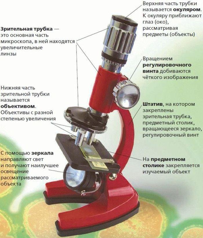 Микроскоп картинки с описанием частей