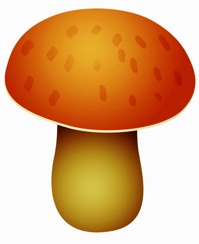 Картинки грибов с названиями для детей и взрослых