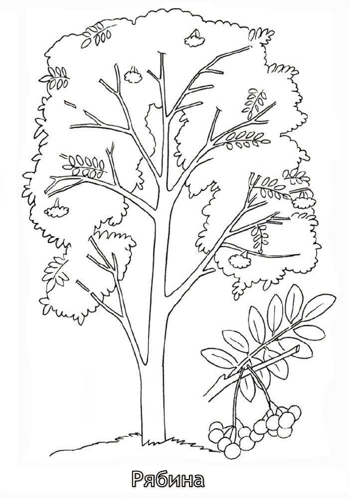 Рябина рисунок цветными карандашами и красками для детей