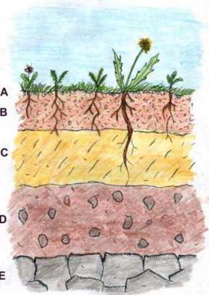 правило слой почвы картинки продолжить