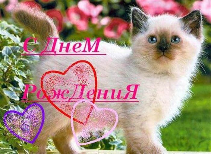 Мандаринками зимние, открытка с котятами с днем рождения
