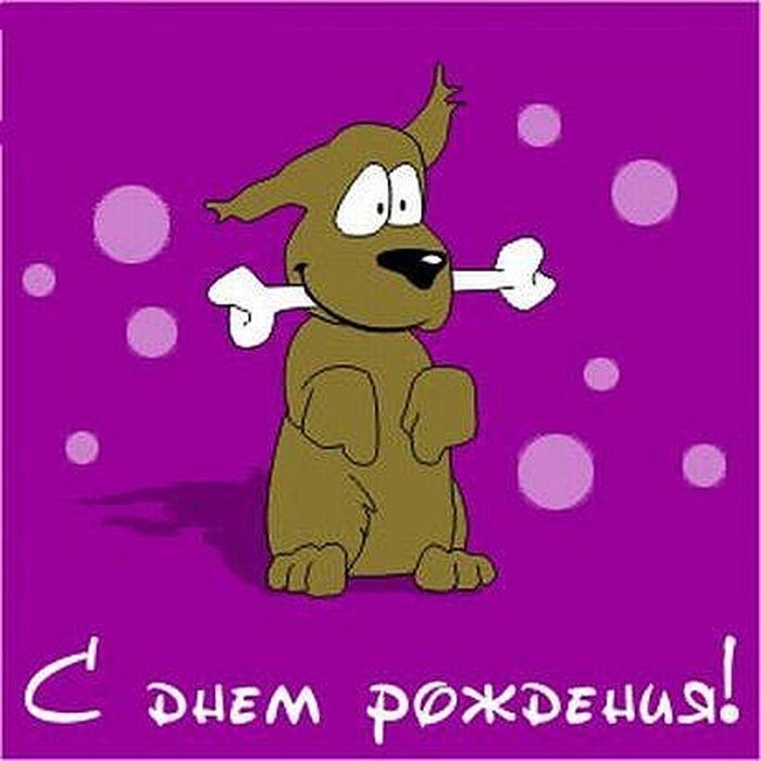 большая поздравление собаке с днем рождения 2 года в стихах наполнились трогательными праздничными